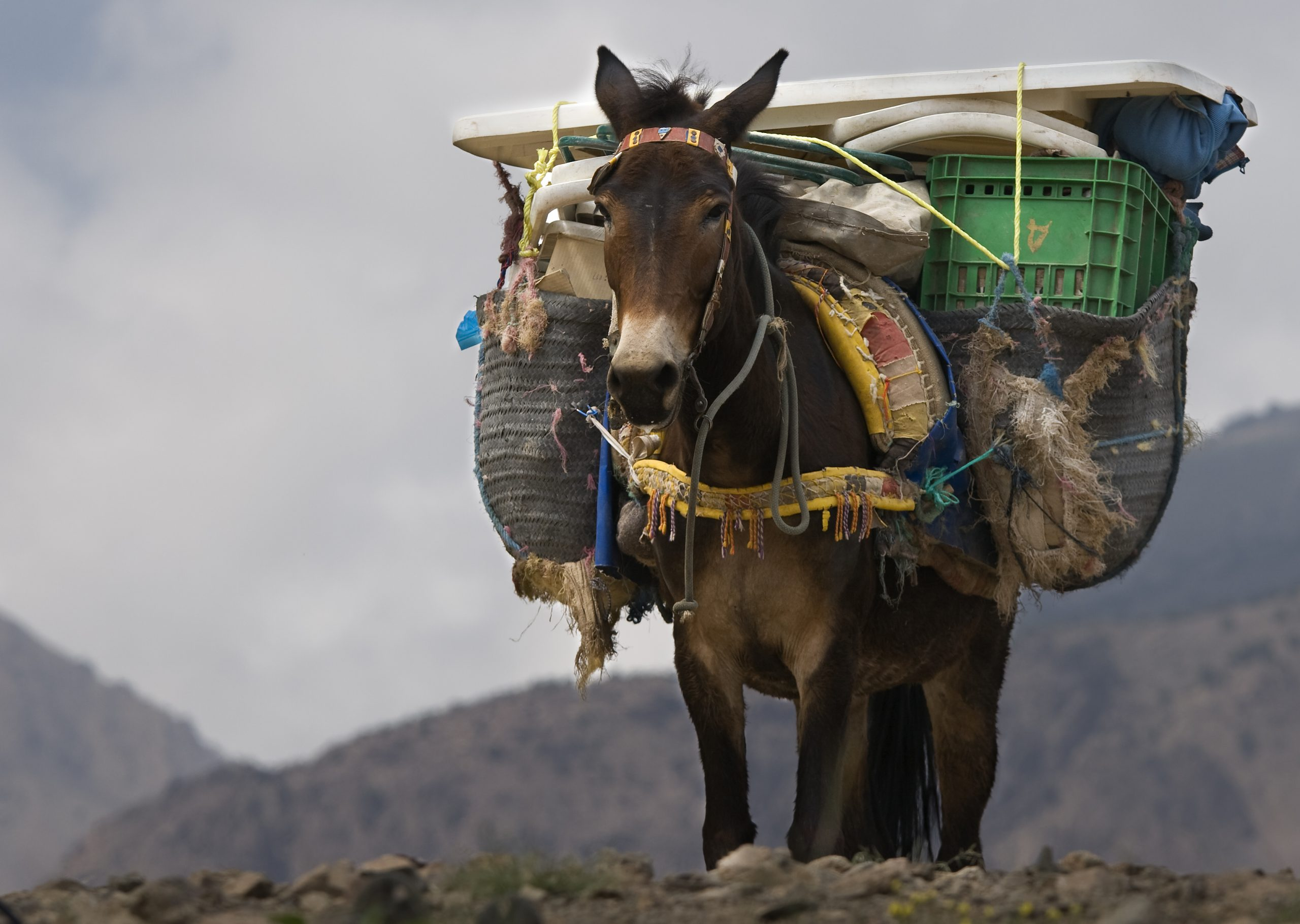 Everything You Need to Know About [Money] Mules & How to Detect Them- Hint: It's Not a Sniff Test
